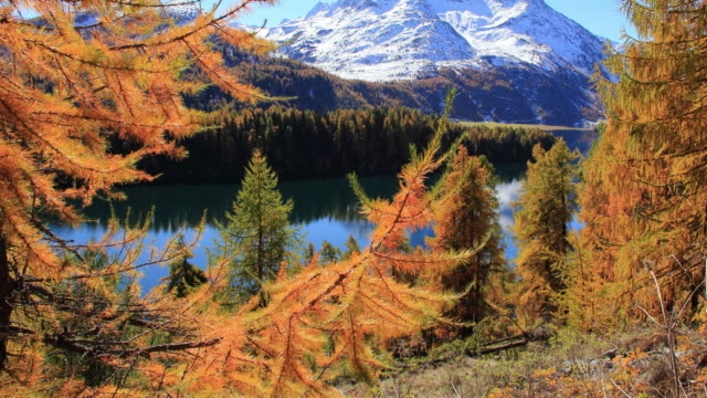 mounatin lake surrounded by colored larch trees - マツ科点の映像素材/bロール