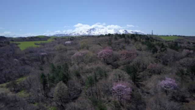 ws aerial mount chokai and forest, nikaho, akita prefecture, japan - 鳥海山点の映像素材/bロール