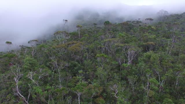 Mount Hamiguitan's pygmy (bonsai) forest.