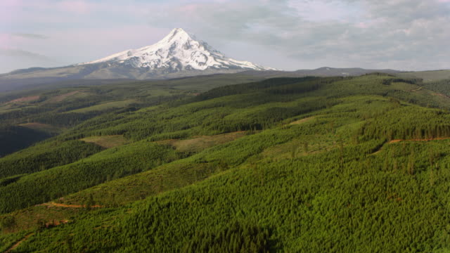 aerial mount hood rising above the vast forest - inquadratura da un aereo video stock e b–roll