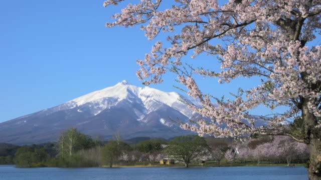 ws pan mount iwaki, cherry blossom and lake, kitatsugaru district, aomori prefecture, japan - aomori prefecture stock videos & royalty-free footage