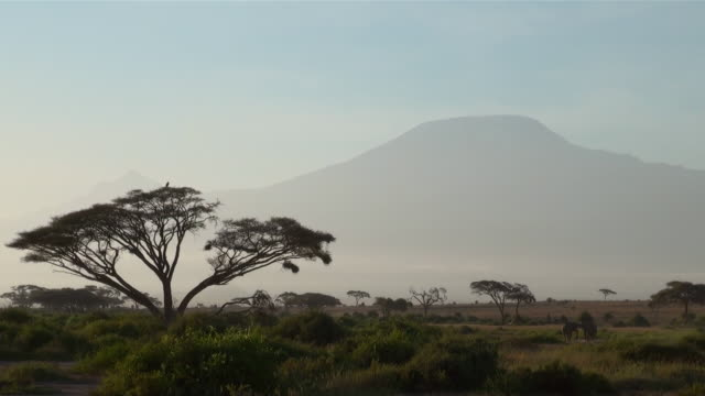 ws mount kilimanjaro in morning dust with big acacia trees in amboseli national park audio / amboseli, rift valley, kenya - 国立公園点の映像素材/bロール