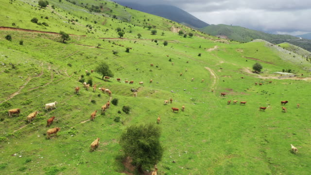 mount olympus and ranch scenery / macedonia, greece - livestock stock videos & royalty-free footage