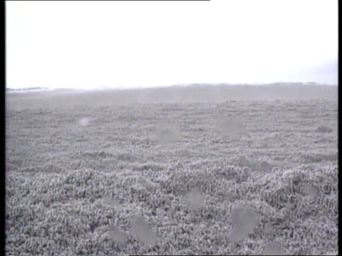mount pinatubo philippines luzon island ms slopes of mt pinatubo pull out smoke gv devastated landscape with many broken trees gv ash and volcanic... - luzon stock videos & royalty-free footage