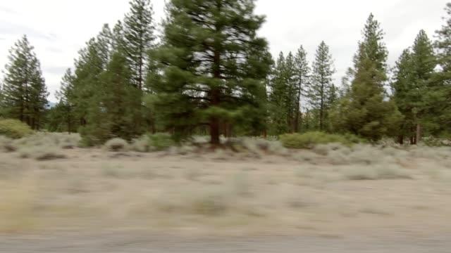 vídeos de stock e filmes b-roll de mount shasta xv synced series right view driving process plate - abeto