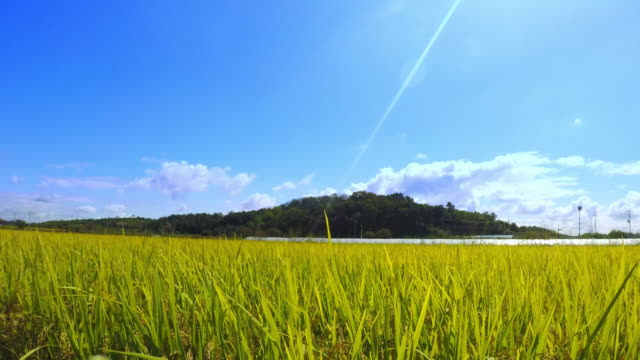 mountain and a agricultural field - rustic stock videos & royalty-free footage