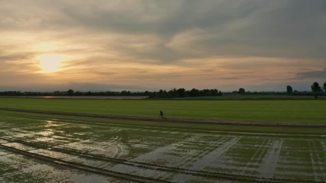 vidéos et rushes de tour de vélo de montagne par des rizières au coucher du soleil - vue latérale