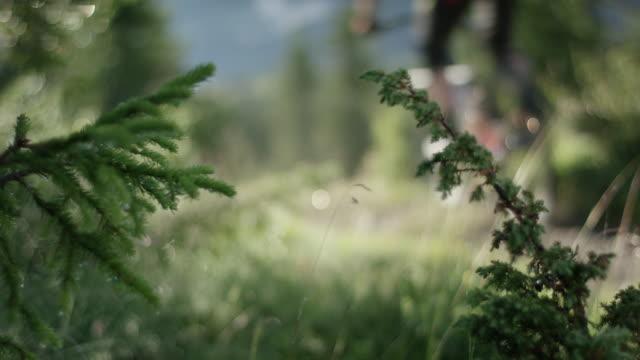 mountain bike rides down hill - mountain bike stock videos & royalty-free footage