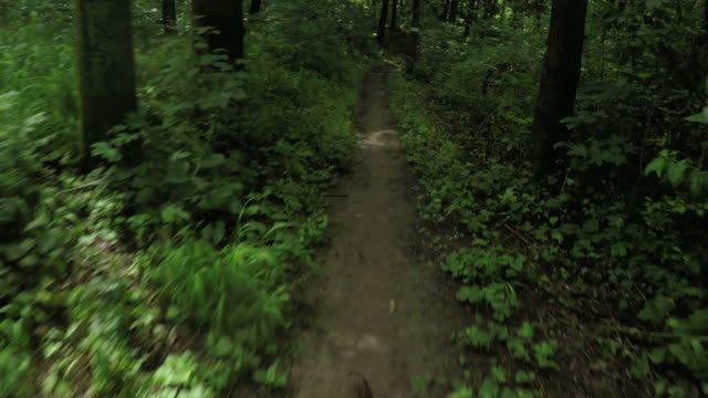 mountain bike speed in a forest, personal perspective cycling. - mountain biking stock videos & royalty-free footage