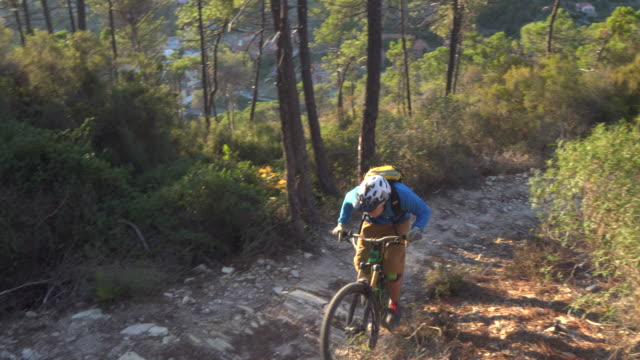Mountain biker cranks along forest trail at sunrise