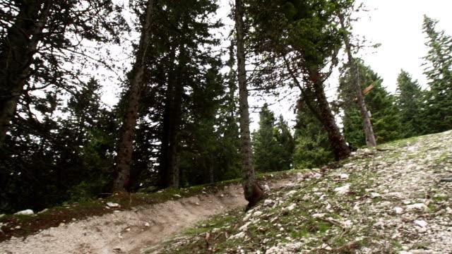 vídeos de stock, filmes e b-roll de hd: mountain biker downhill ao longo da trilha difícil ir - filme colagem