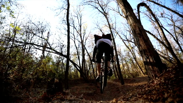 Mountain biker on a dirt path in a wilderness forest