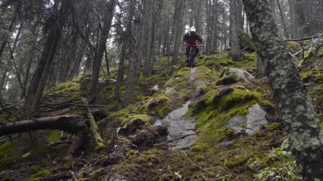 A mountain biker rides on a singletrack trail in the forest.