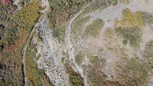 vidéos et rushes de sentiers de montagne d'équitation de vélo de montagne de montagne - mountain bike