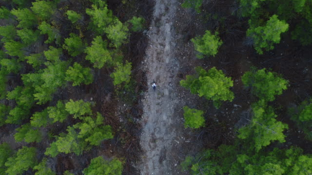 vídeos de stock e filmes b-roll de mountain biker riding on a dirt road aerial view photography - footpath