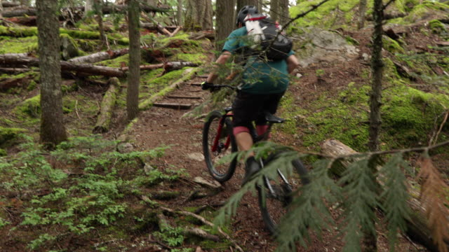 mountain biker traverses forest trail, on narrow path - temperate rainforest stock videos & royalty-free footage