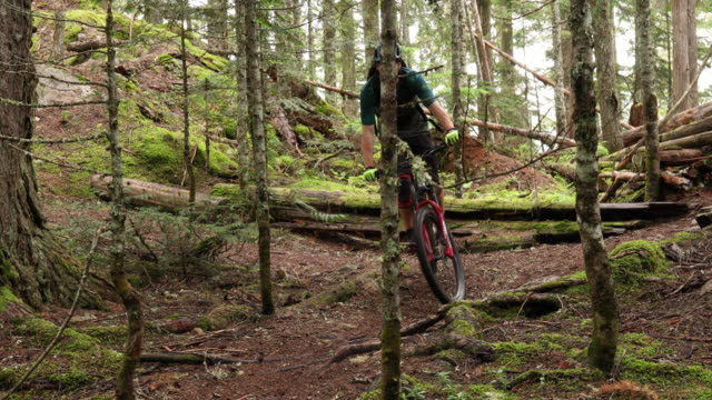 mountain biker traverses forest trail, on narrow path - mountain bike stock videos & royalty-free footage