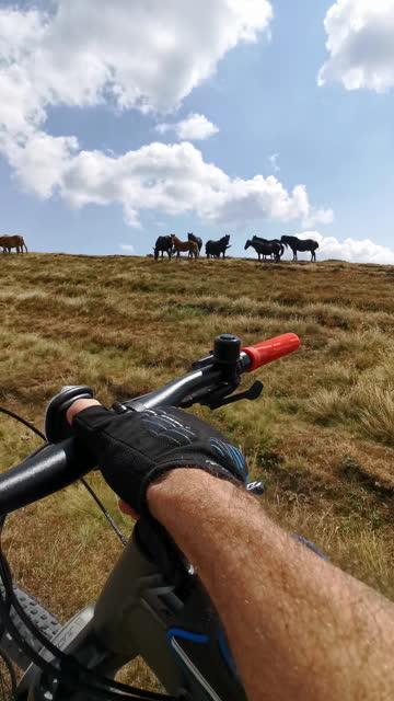 馬の群れ、povの近くのトレイルを通過しながらマウンテンバイカーのブログ。 - サイクリングロード点の映像素材/bロール