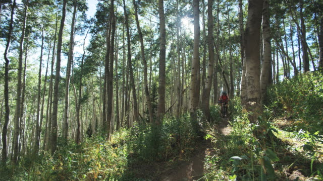 mountain bikers biking through a grove of trees - spandex stock videos & royalty-free footage