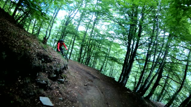 Mountain bikers climb up slope in bright green forest