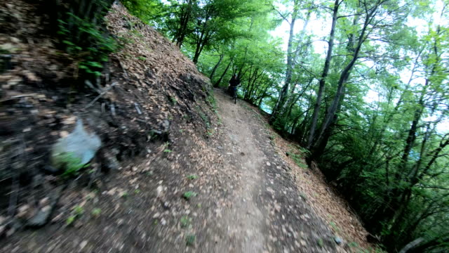 mountain bikers descend through bright green forest - mountain bike stock videos & royalty-free footage