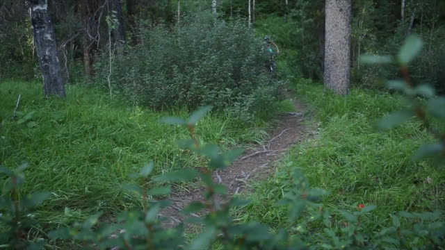 mountain bikers ride along mountain trail, in forest - trail ride stock videos and b-roll footage