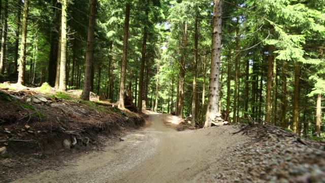 vidéos et rushes de mountain bikers riding downhill in green forest - faire du vélo tout terrain