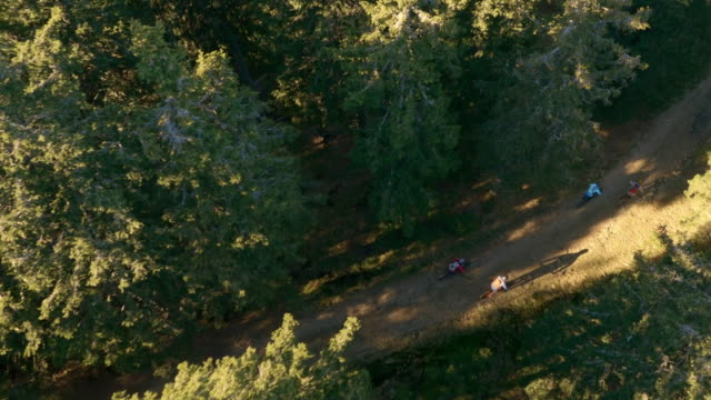 AERIAL Mountain bikers riding on a forest trail in sunshine