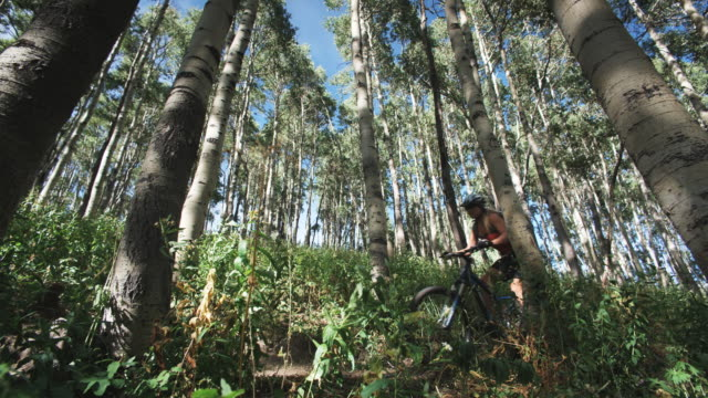 mountain bikers riding through the trees - skigebiet brighton stock-videos und b-roll-filmmaterial