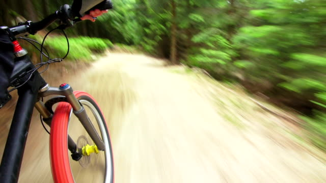 Mountain Biking Through Forest TL POV (3 Shots)s