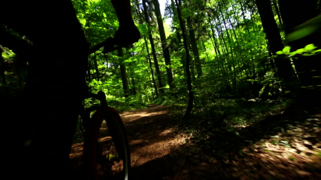 Mountain Biking Through Green Forest POV