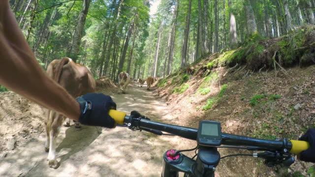 pov mountain biking. - mountain bike stock videos & royalty-free footage