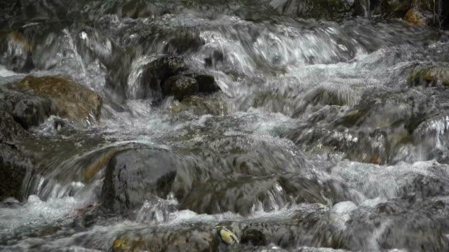 mountain brook schwarze luetschine, grindelwald, bernese alps, canton of bern, switzerland - bernese alps stock videos & royalty-free footage