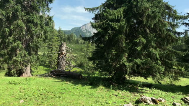mountain coniferous forest - austria stock videos & royalty-free footage