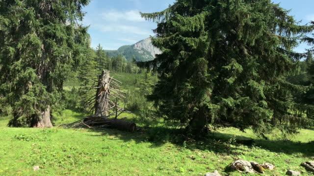stockvideo's en b-roll-footage met berg coniferous forest - austria