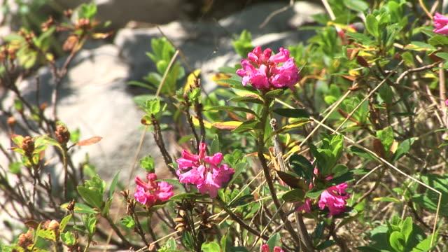 HD: Mountain flowers