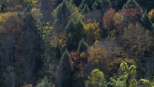 Mountain Foliage Pull Back To Green Field