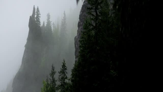 stockvideo's en b-roll-footage met bergbos bedekt met mist - naaldboom