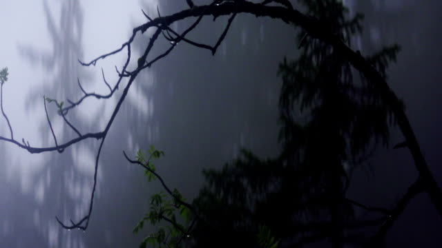 Mountain forest covered with fog