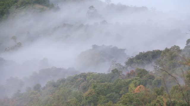 Mountain forest in the fog and mist. High angle view of over tropical rain forest mountains with white fog, Low lying cloud over evergreen forests.