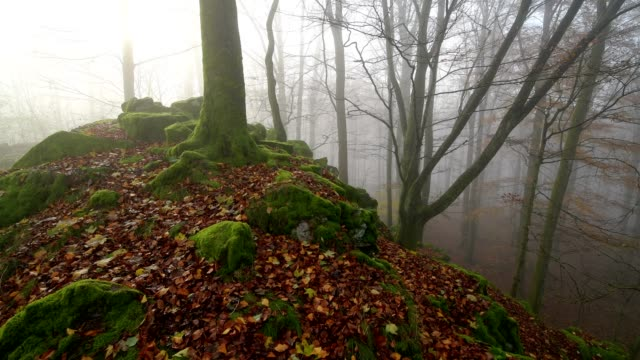 mountain forest with morning mist in autumn, katzenbuckel, waldbrunn, odenwald, baden-württemberg, germany - moss stock videos & royalty-free footage