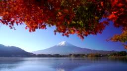 Mountain fuji with red maple in Autumn, Kawaguchiko Lake, Japan