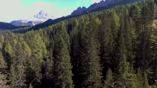 vídeos de stock e filmes b-roll de mountain hill  forest on a sunny day - pine