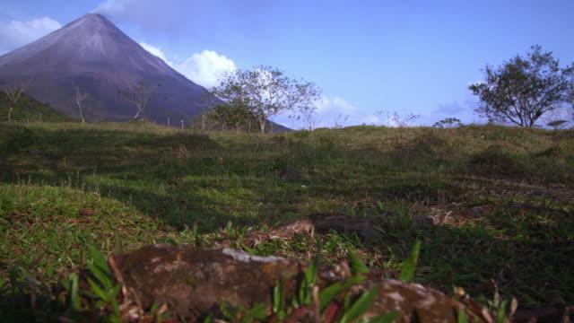 mountain in background of blurry shot of ants on tree root - プロボ点の映像素材/bロール