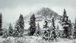 Mountain in Winter pine forest
