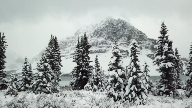 mountain in winter pine forest - alberta stock videos & royalty-free footage