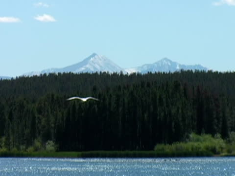 lago di montagna foresta e - pinacee video stock e b–roll