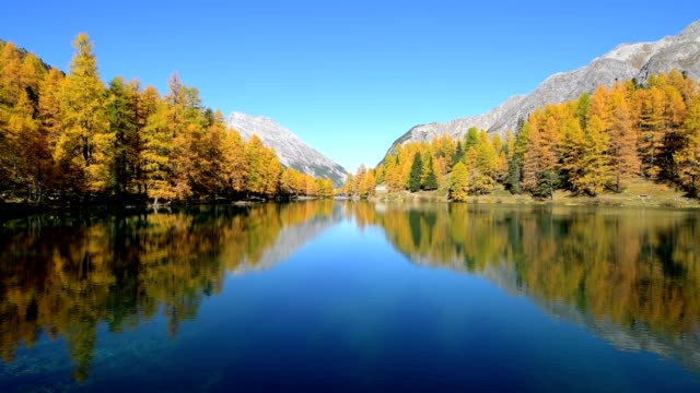 mountain lake with larch trees in autumn, preda, lake palquognasee, lai da palquogna, albula-pass, grisons, switzerland, european alps - 池点の映像素材/bロール