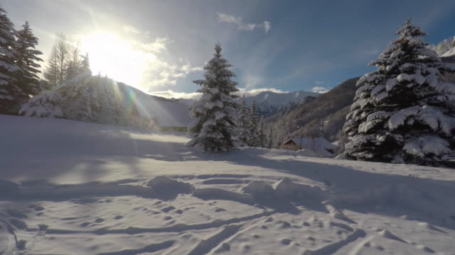 mountain landscape under the snow - fir tree stock videos and b-roll footage