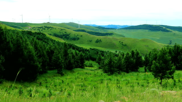 mountain landscape - fir tree stock videos and b-roll footage